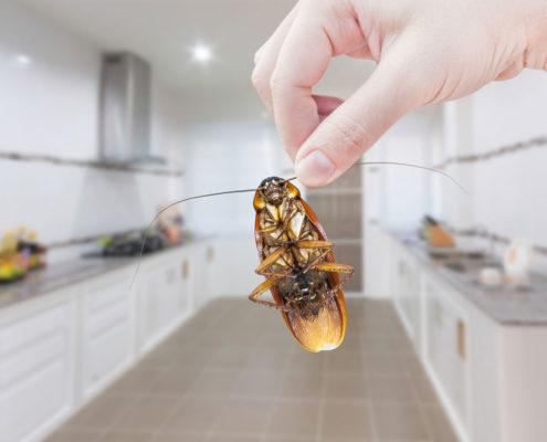 DIY vs Professionals Pest Control