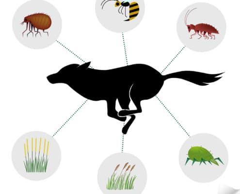 dog fleas pest control il