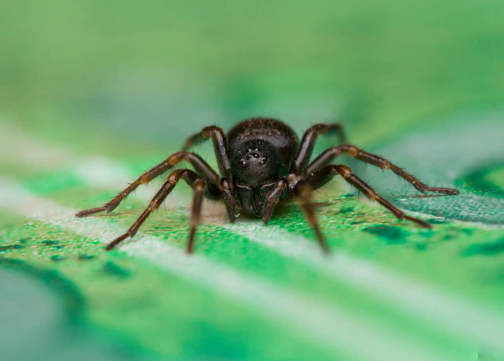 Most Common Spiders In Illinois Madison County Termite And Pest Control
