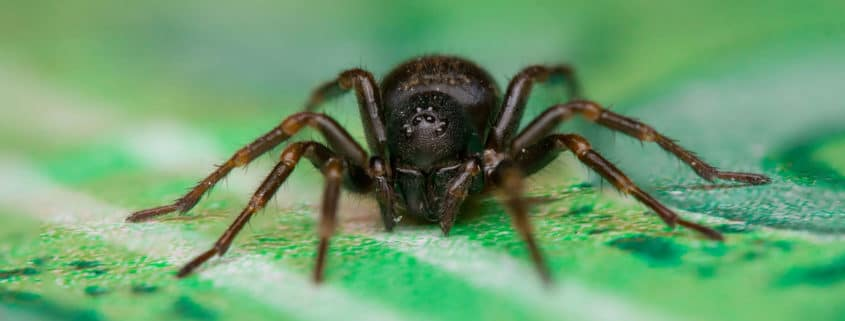 common house spiders pest control - most common spiders